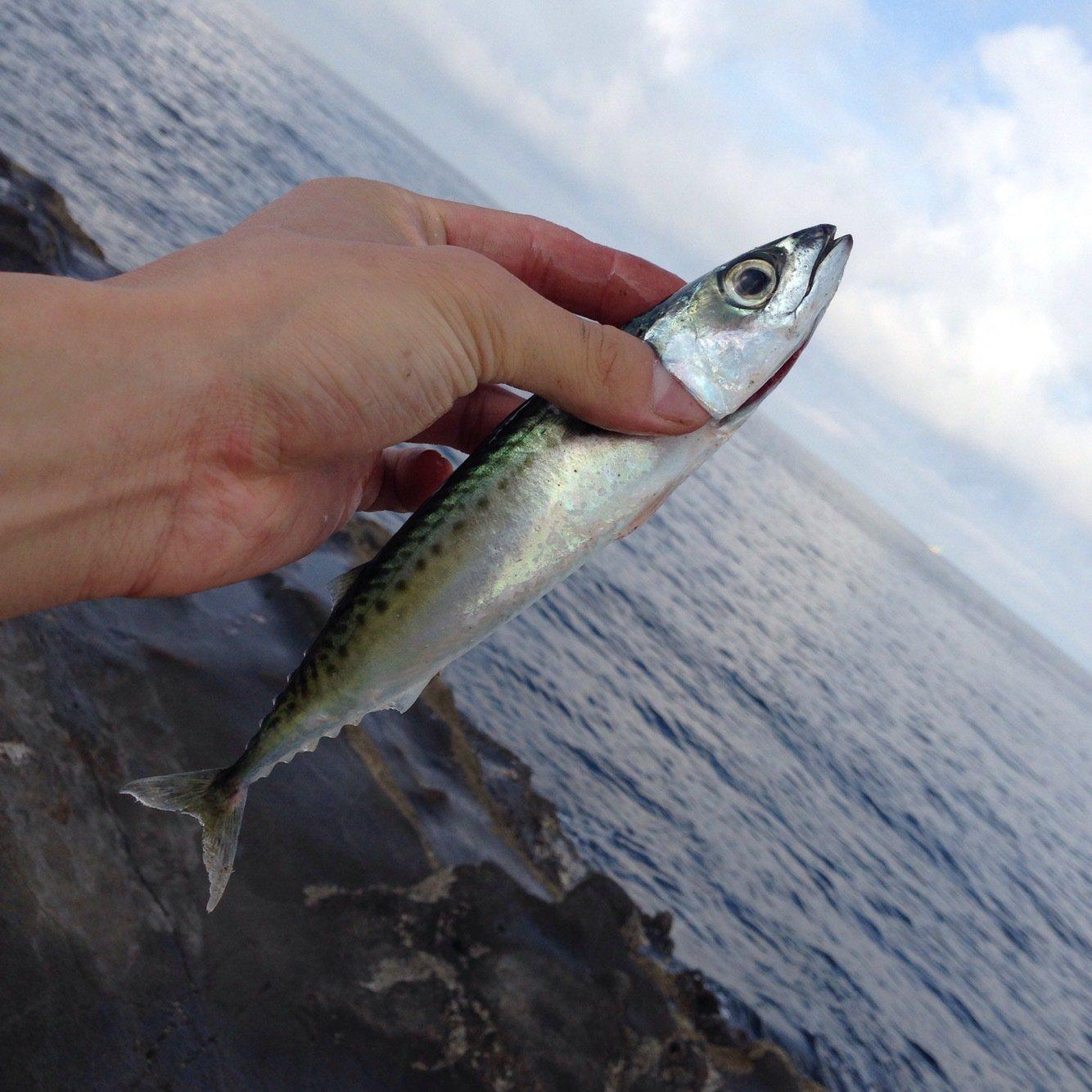 いいのさんの投稿画像,写っている魚は