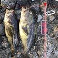 綾聖さんの北海道島牧郡での釣果写真