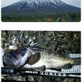 かなぼうさんの北海道岩内郡での釣果写真