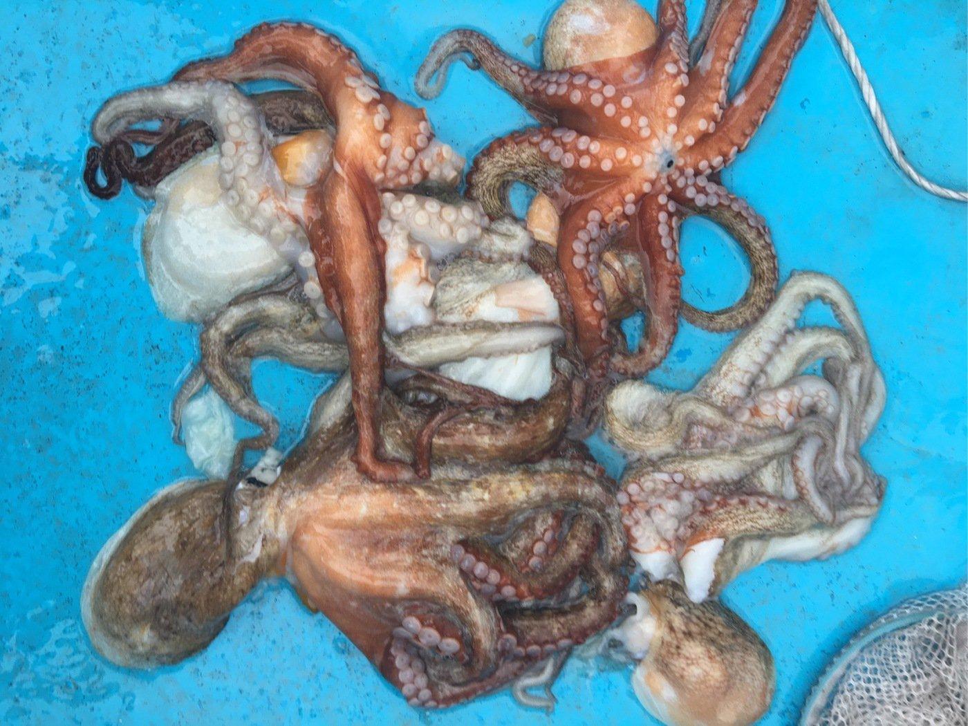 michiさんの投稿画像,写っている魚はマダコ