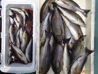 takaさんの投稿画像,写っている魚はイサキ