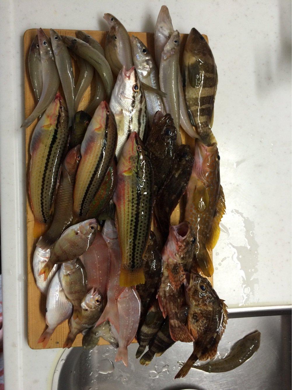 むろさんの投稿画像,写っている魚はメバル