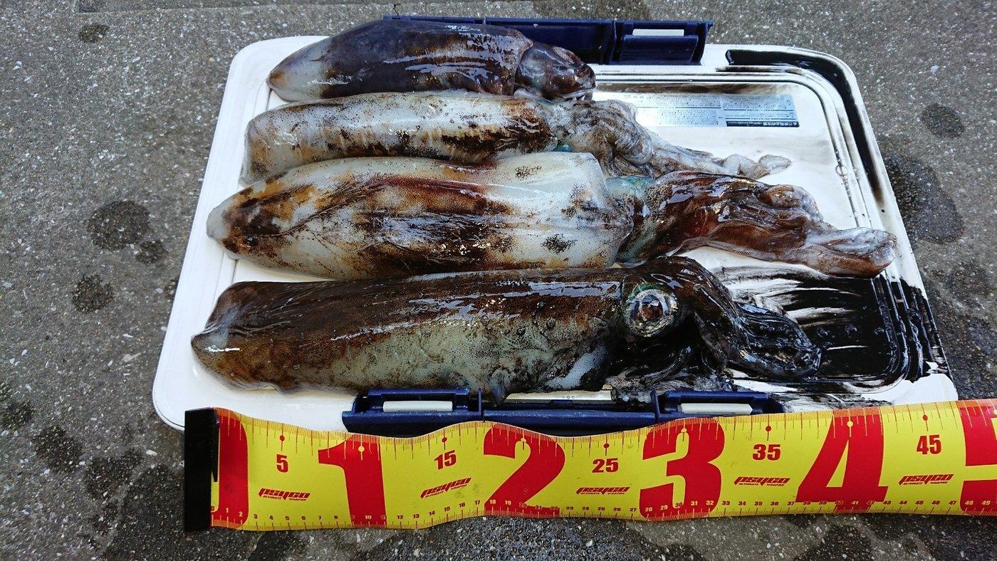 なおさんの投稿画像,写っている魚はアオリイカ