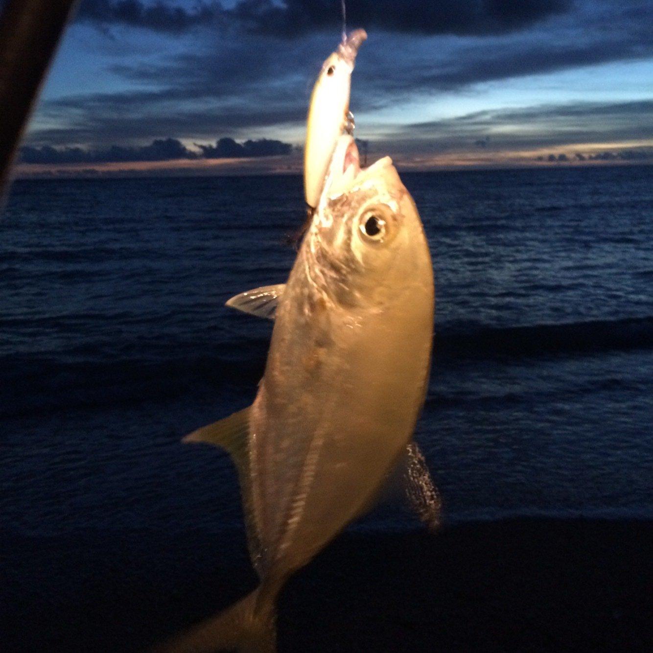 マカロンさんの投稿画像,写っている魚はギンガメアジ