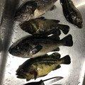 釣り Lv.26さんの北海道枝幸郡での釣果写真
