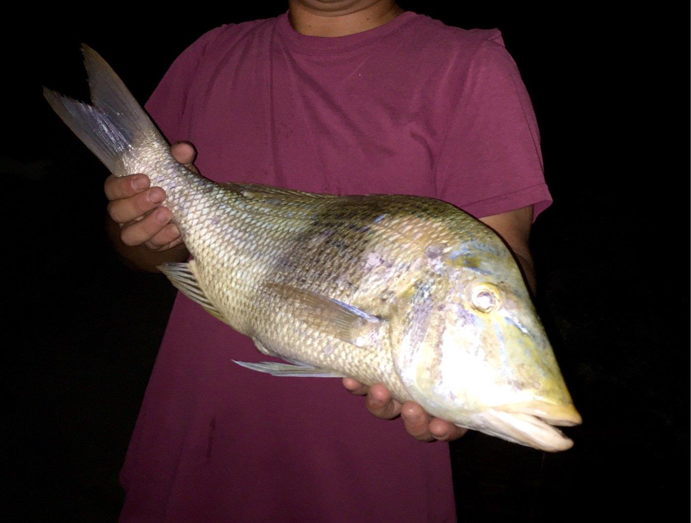 ゆうちゃんさんの投稿画像,写っている魚はハマフエフキダイ