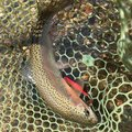 かずやさんの北海道足寄郡での釣果写真