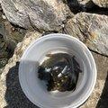 なんしぃさんの静岡県湖西市でのカサゴの釣果写真