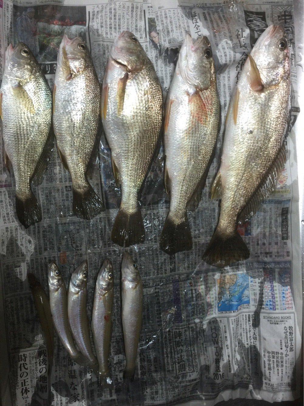 けんぼーさんの投稿画像,写っている魚はイシモチ