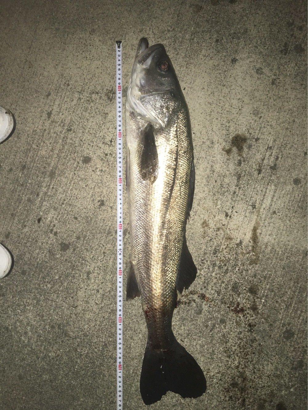 日登賢侑さんの投稿画像,写っている魚はスズキ