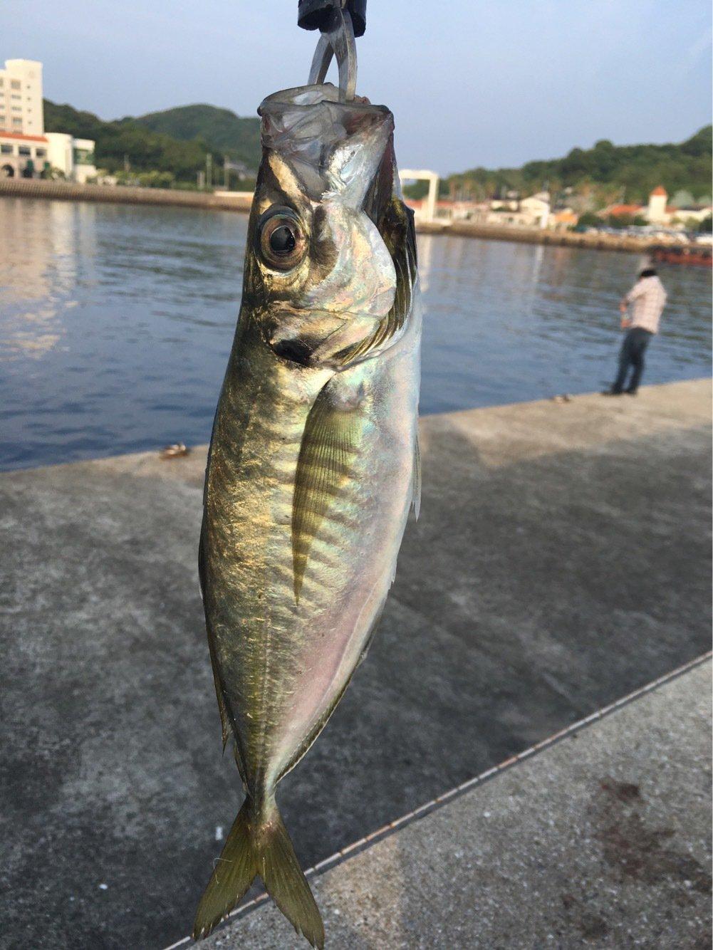 康平さんの投稿画像,写っている魚はアジ