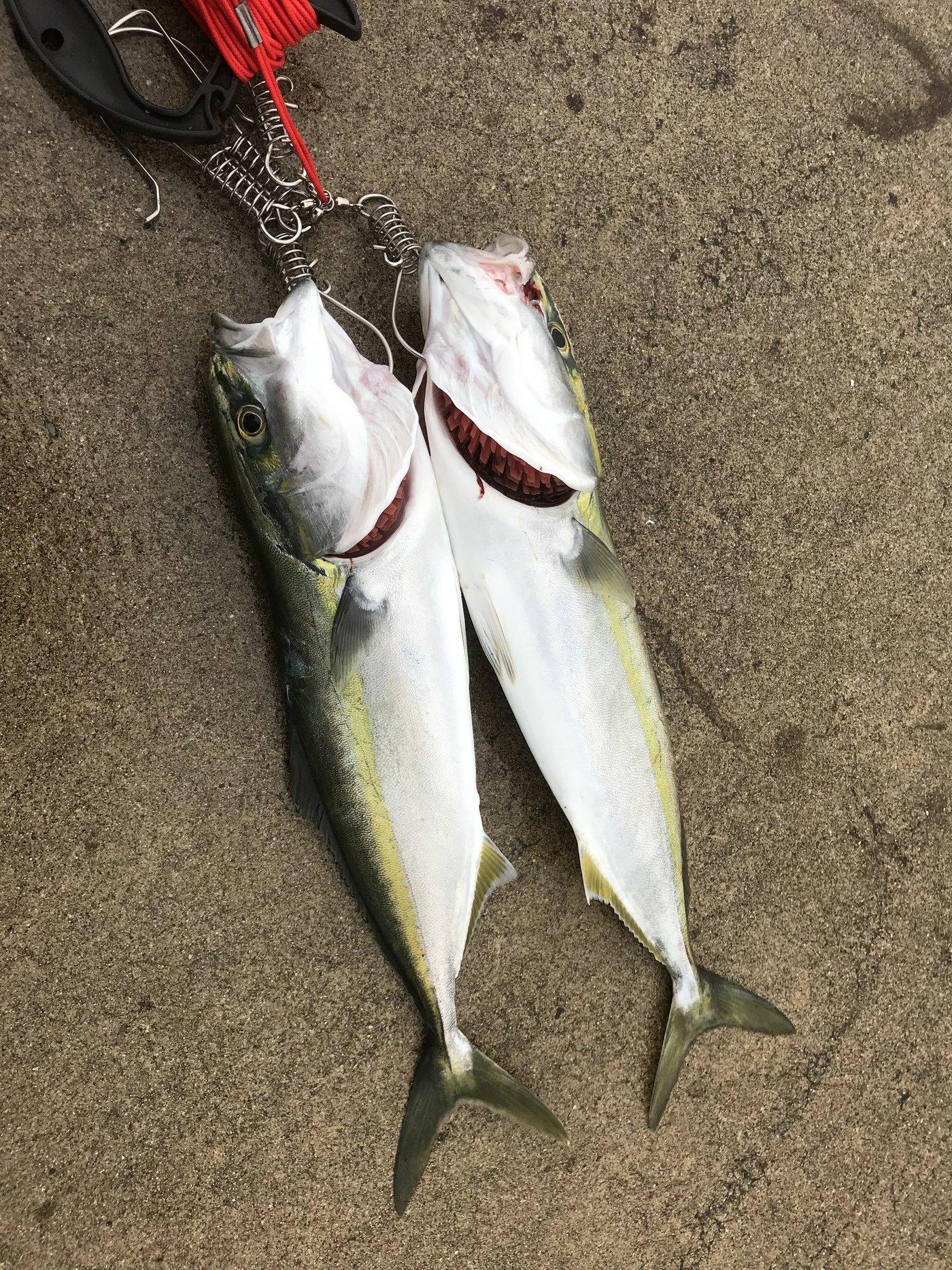 きみかずさんの投稿画像,写っている魚は