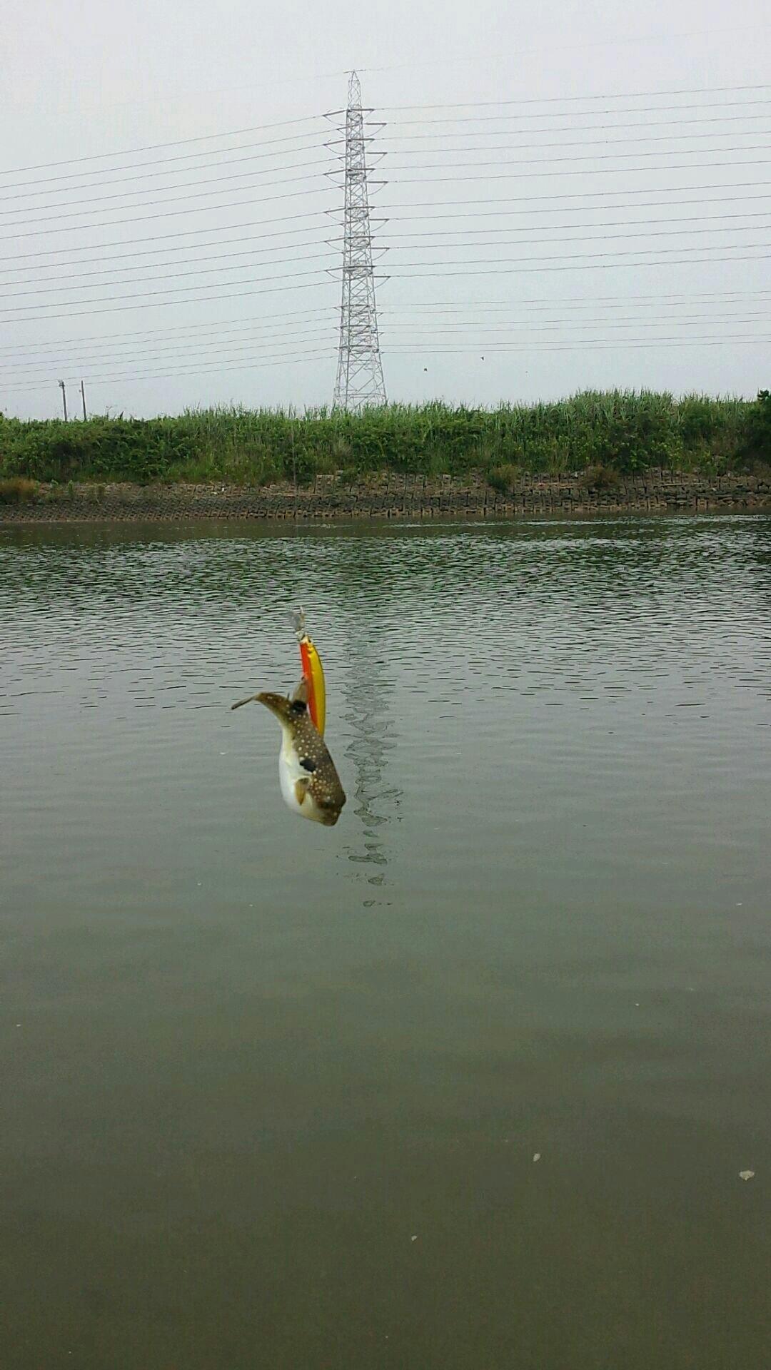 よしよしさんの投稿画像,写っている魚はフグ