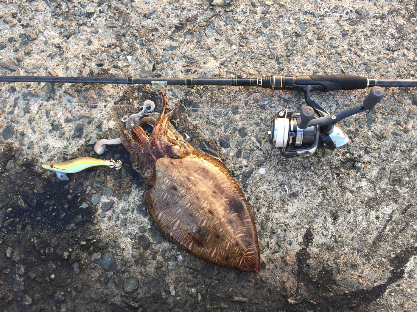 えびさんの投稿画像,写っている魚はコウイカ