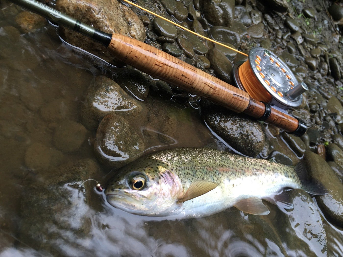 釣りバカさんの投稿画像,写っている魚はニジマス