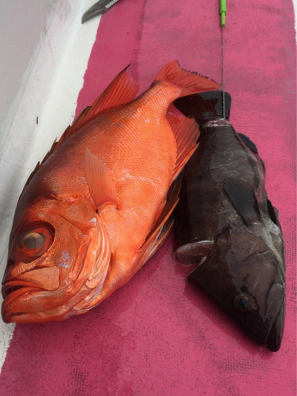 TAKAさんの投稿画像,写っている魚は