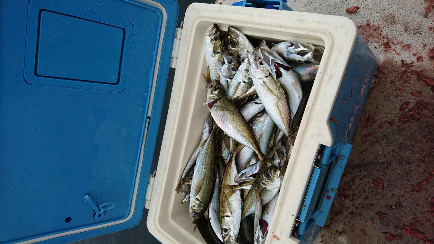 ゆうさんの投稿画像,写っている魚はアジ