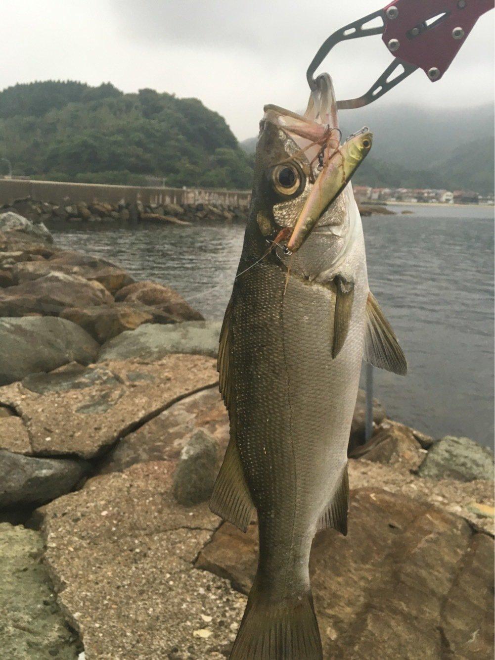 ぐんたさんの投稿画像,写っている魚はヒラスズキ