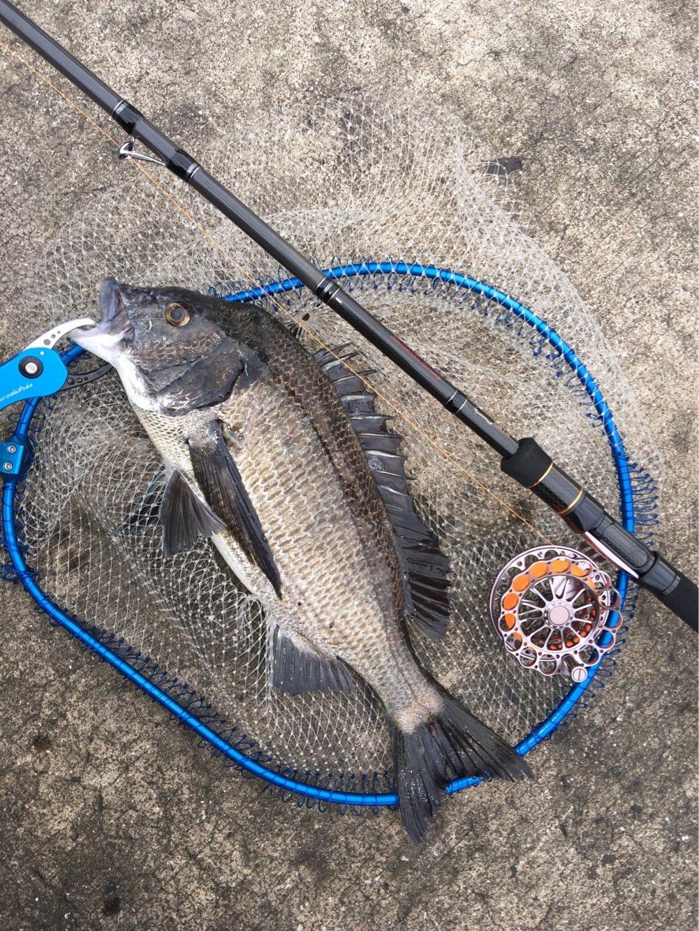 よんすさんの投稿画像,写っている魚はクロダイ