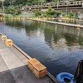テンさんの東京都千代田区での釣果写真