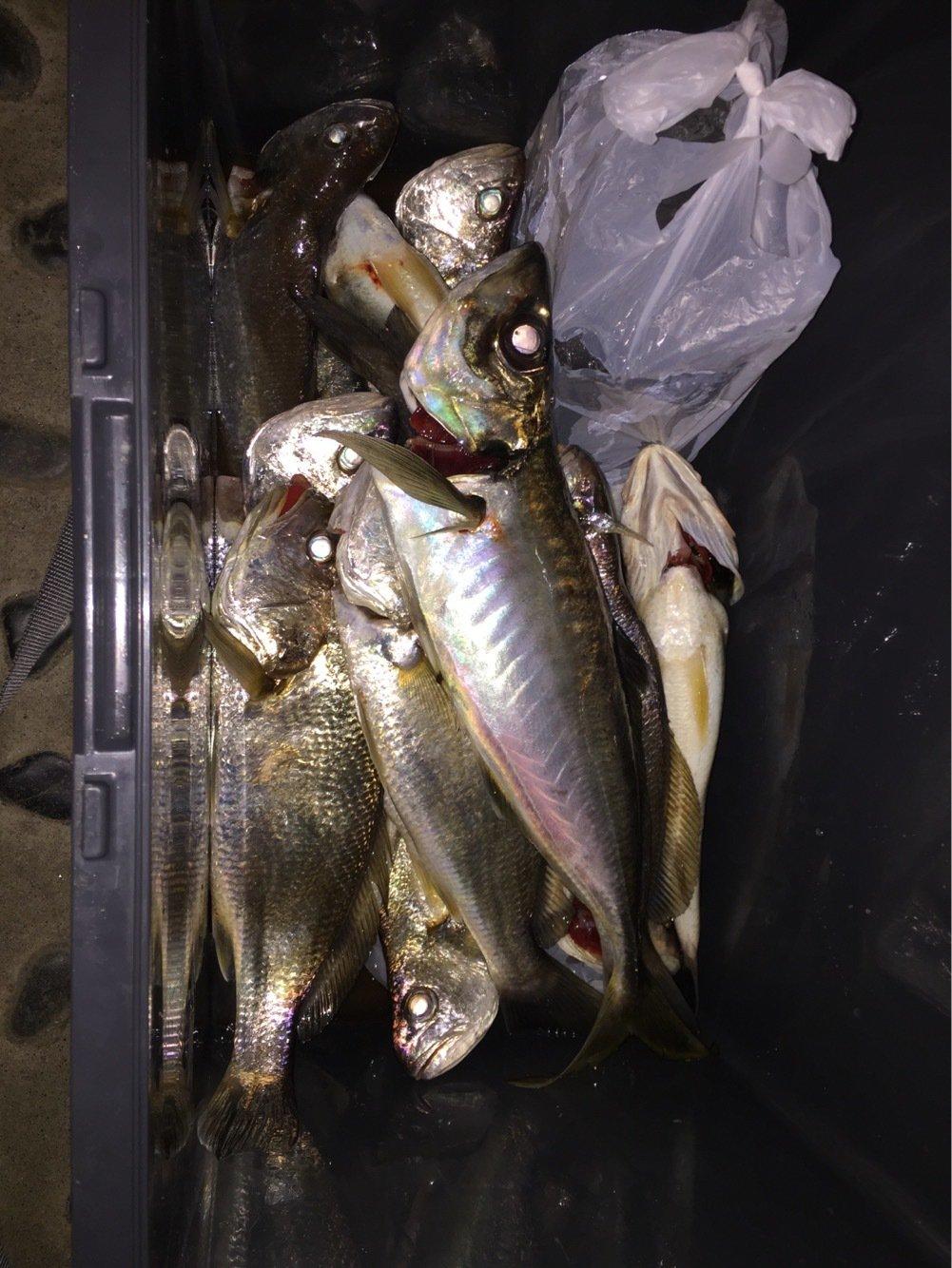 ガクさんの投稿画像,写っている魚はイシモチ