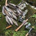 joanne.さんの山形県米沢市での釣果写真