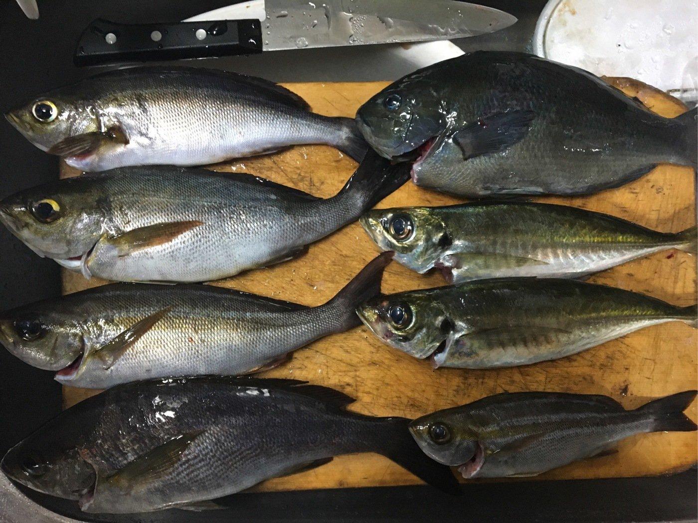 釣りキチおじさんさんの投稿画像,写っている魚はイサキ