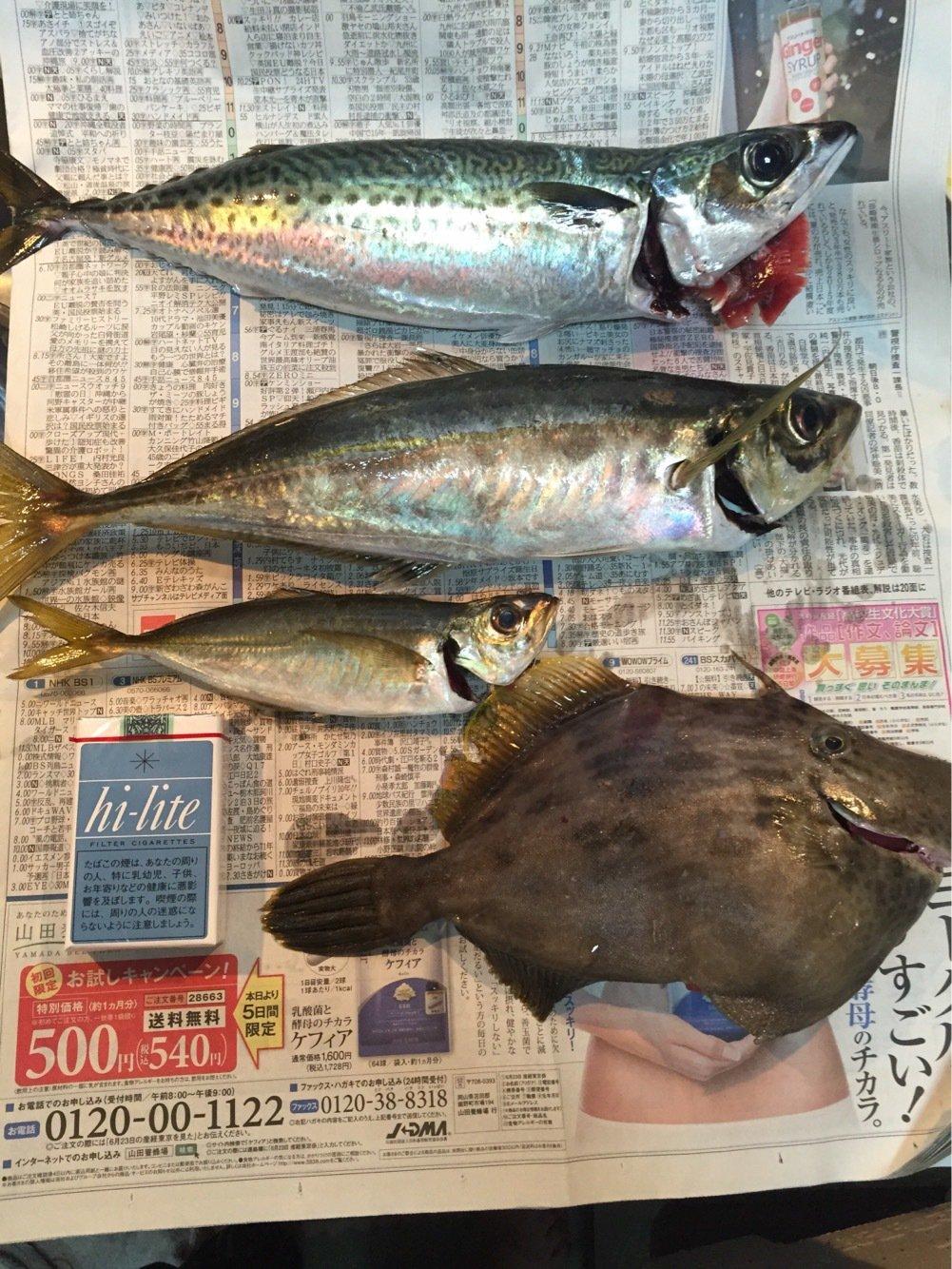 Walterさんの投稿画像,写っている魚はアジ