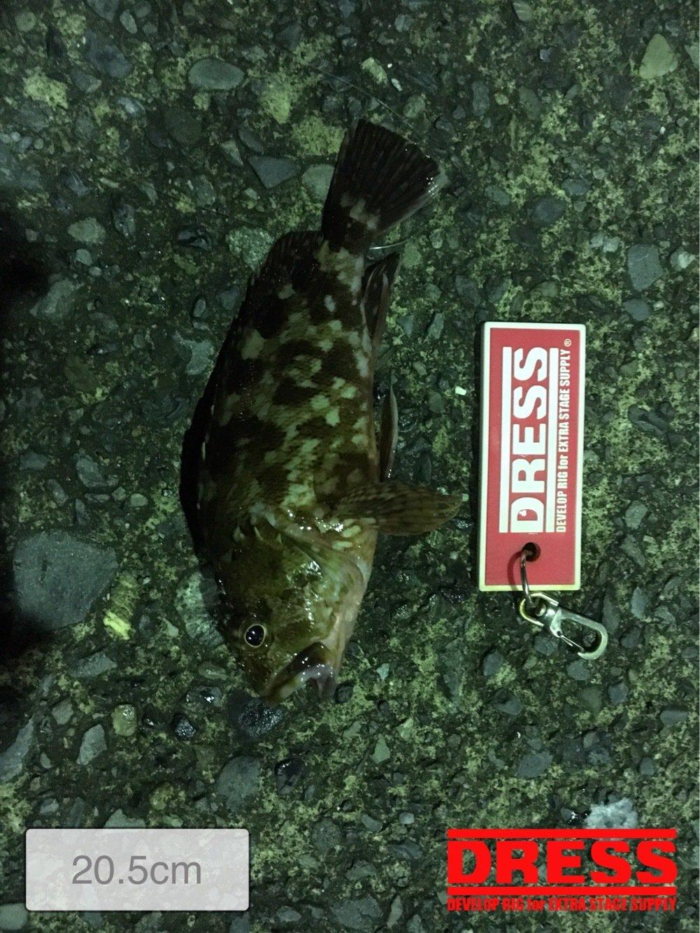 ヒロッシーさんの投稿画像,写っている魚はカサゴ