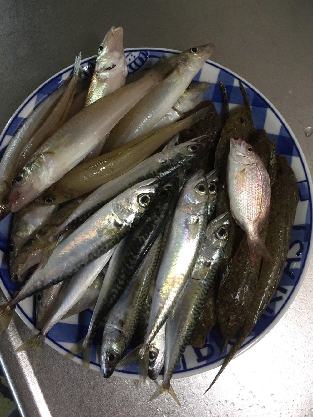 マカダミアン2号さんの投稿画像,写っている魚はメゴチ