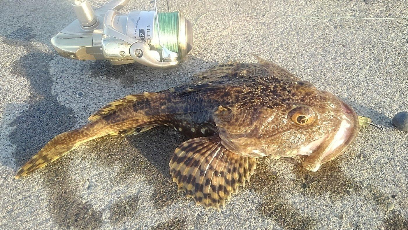 ニジマーhiroさんの投稿画像,写っている魚はカジカ