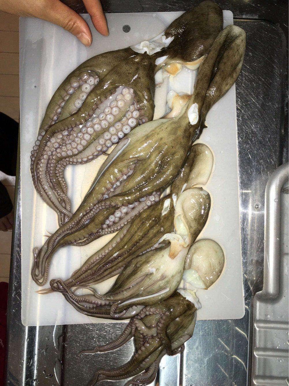 たんたんさんの投稿画像,写っている魚はマダコ