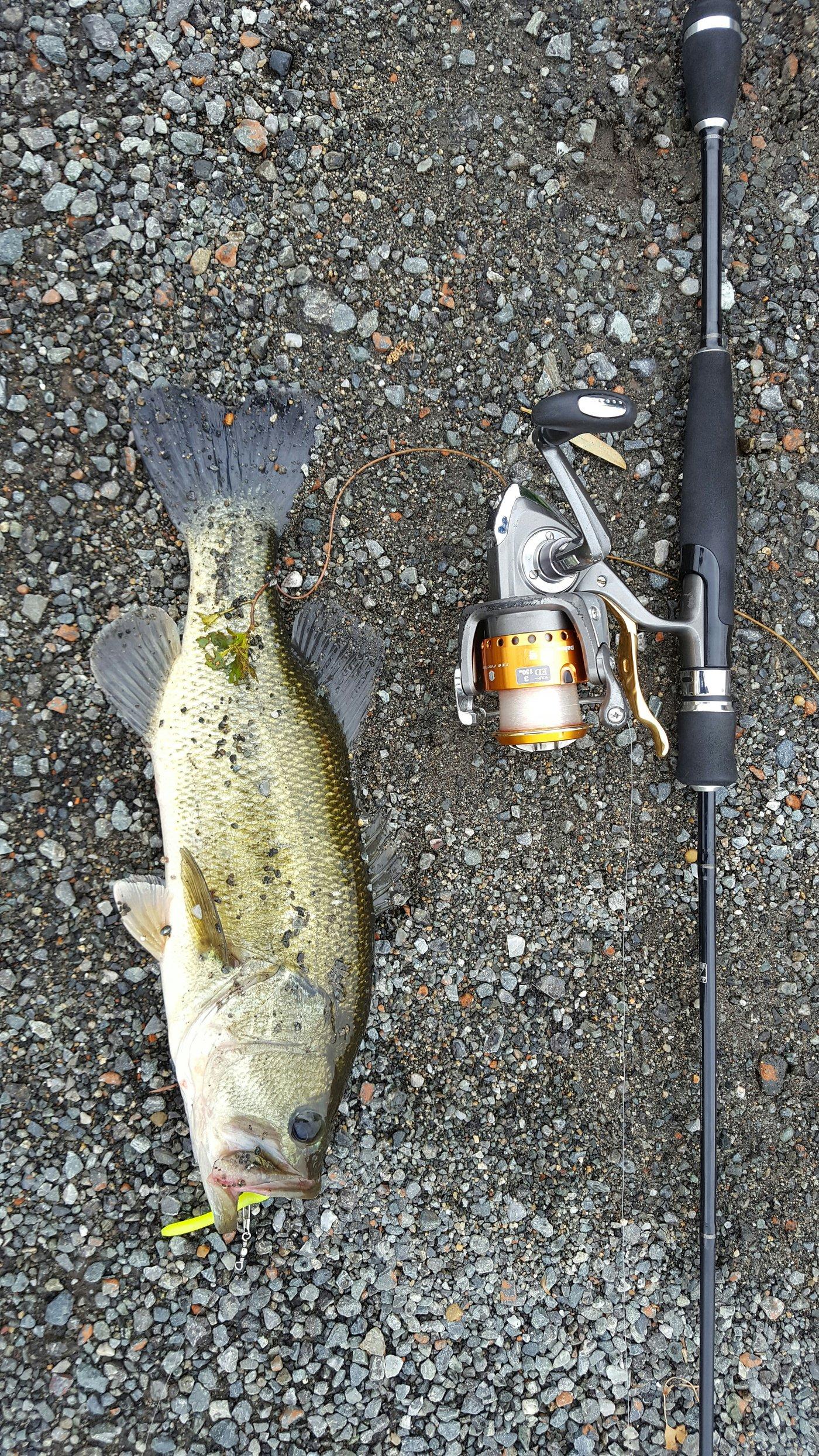 ミクロン( *¯ ꒳¯*)miさんの投稿画像,写っている魚はブラックバス