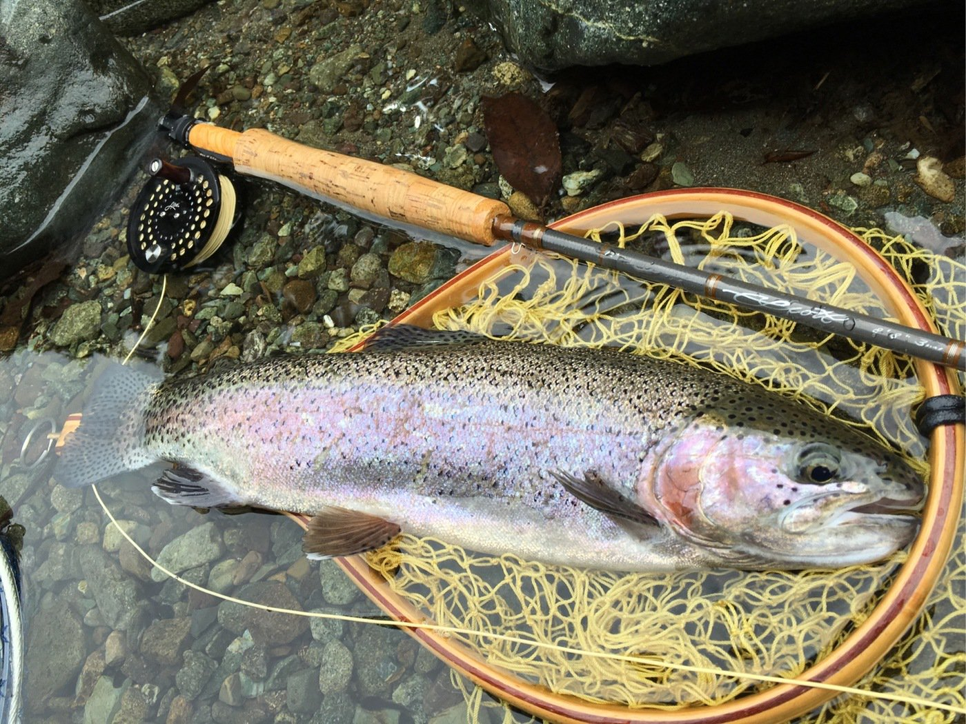 TAKAさんの投稿画像,写っている魚はニジマス