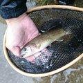 マツさんの福井県吉田郡での釣果写真