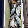 武ちゃんさんの北海道釧路市での釣果写真