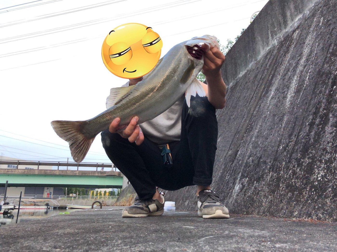 まーさんの投稿画像,写っている魚はスズキ