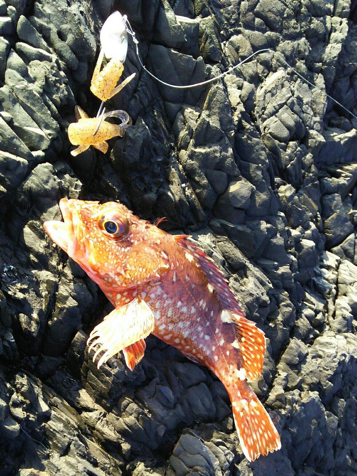 Deandre6さんの投稿画像,写っている魚はカサゴ