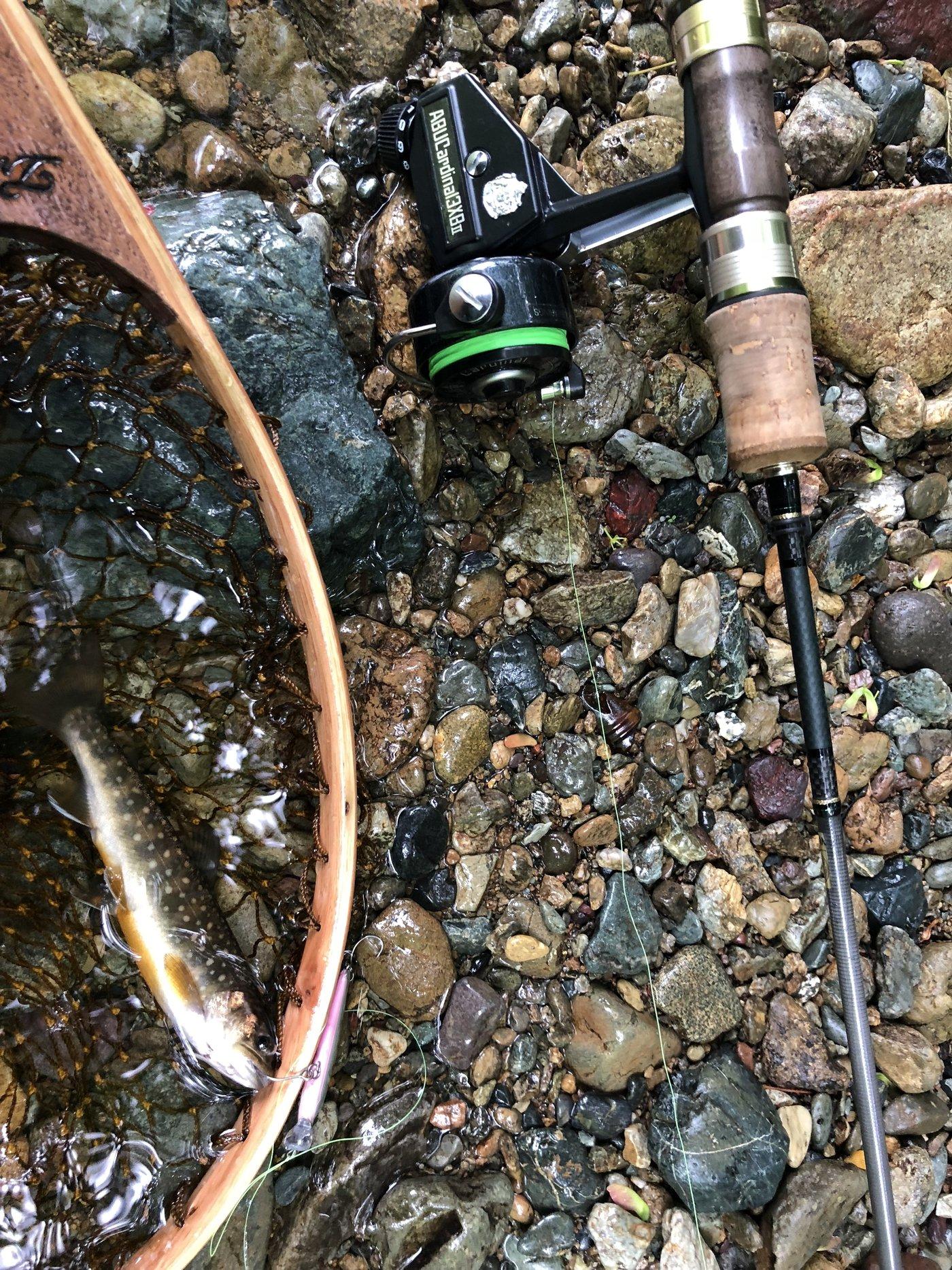 ハギさんの投稿画像,写っている魚はイワナ