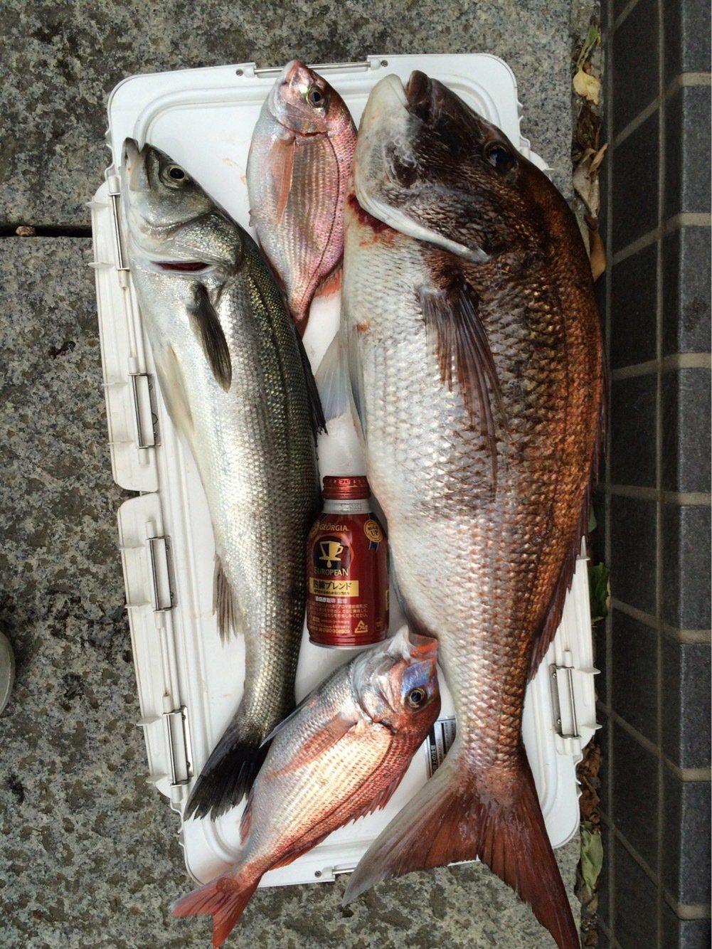 いぬっころさんの投稿画像,写っている魚はマダイ