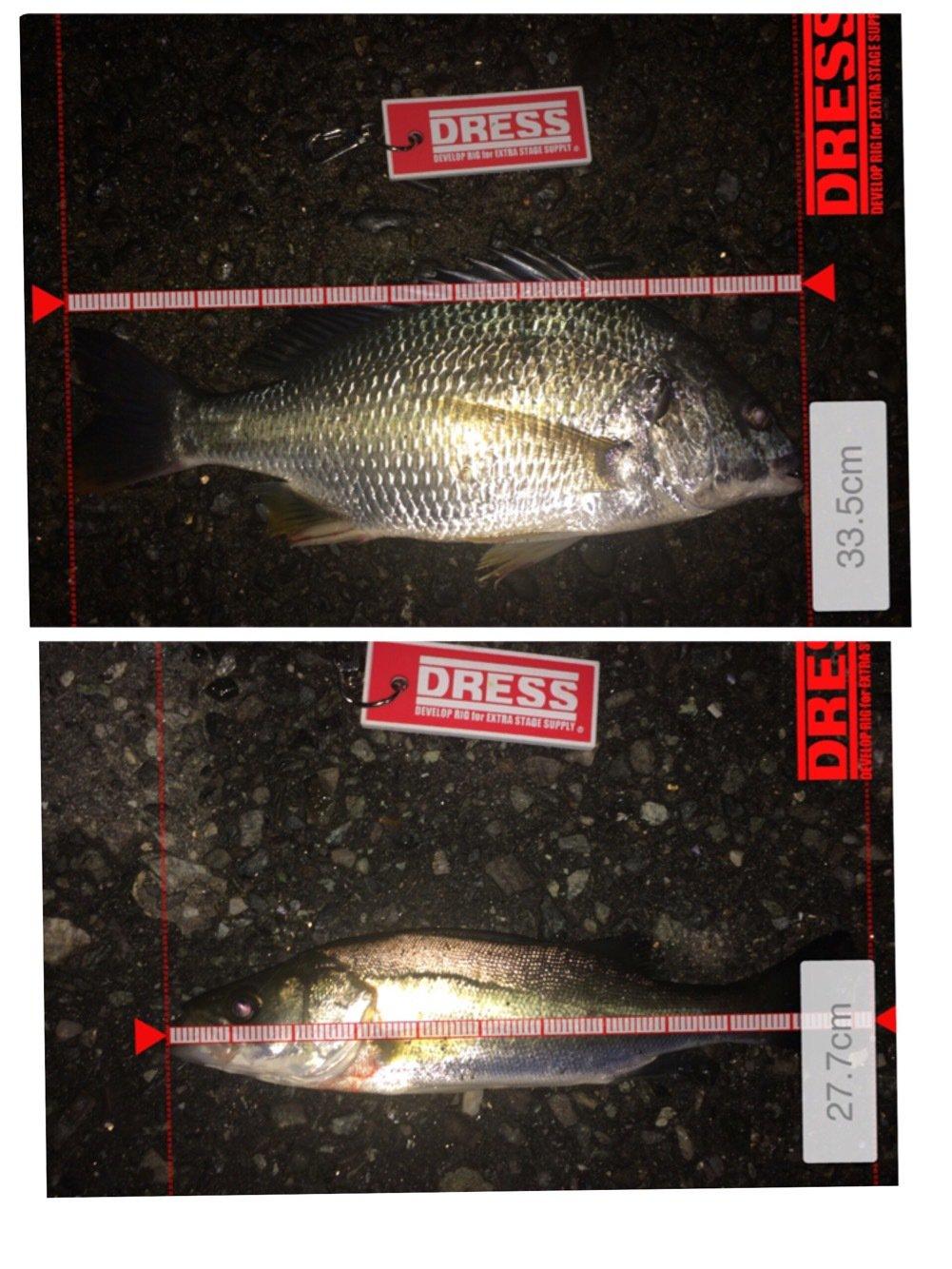 ヤスさんの投稿画像,写っている魚はキチヌ