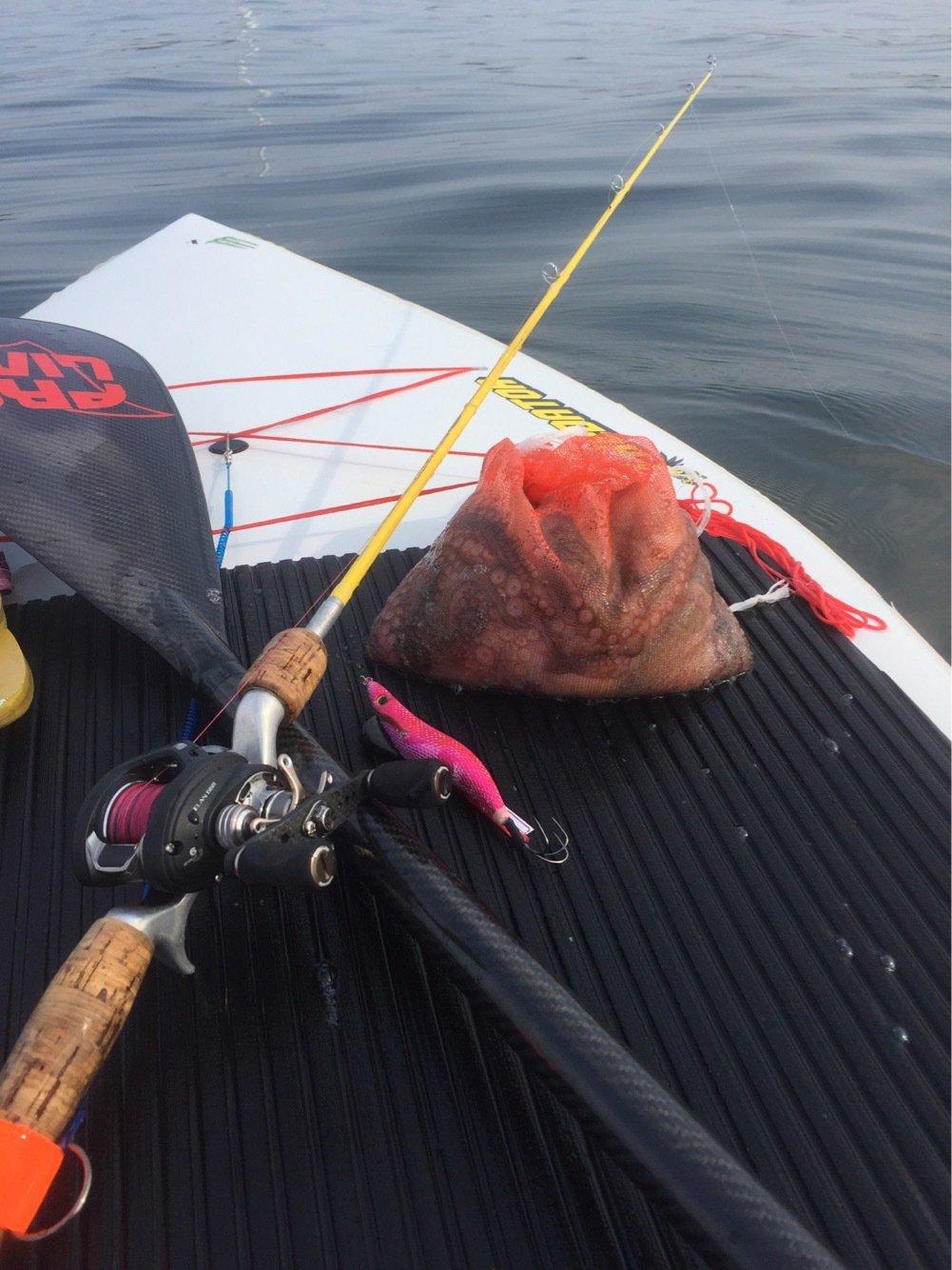 Hutさんの投稿画像,写っている魚はマダコ