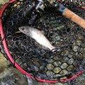 そいやさんの山梨県南アルプス市での釣果写真