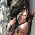 いぬっころさんの新潟県糸魚川市での釣果写真