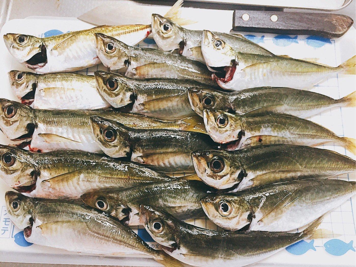 ににょさんの投稿画像,写っている魚はアジ