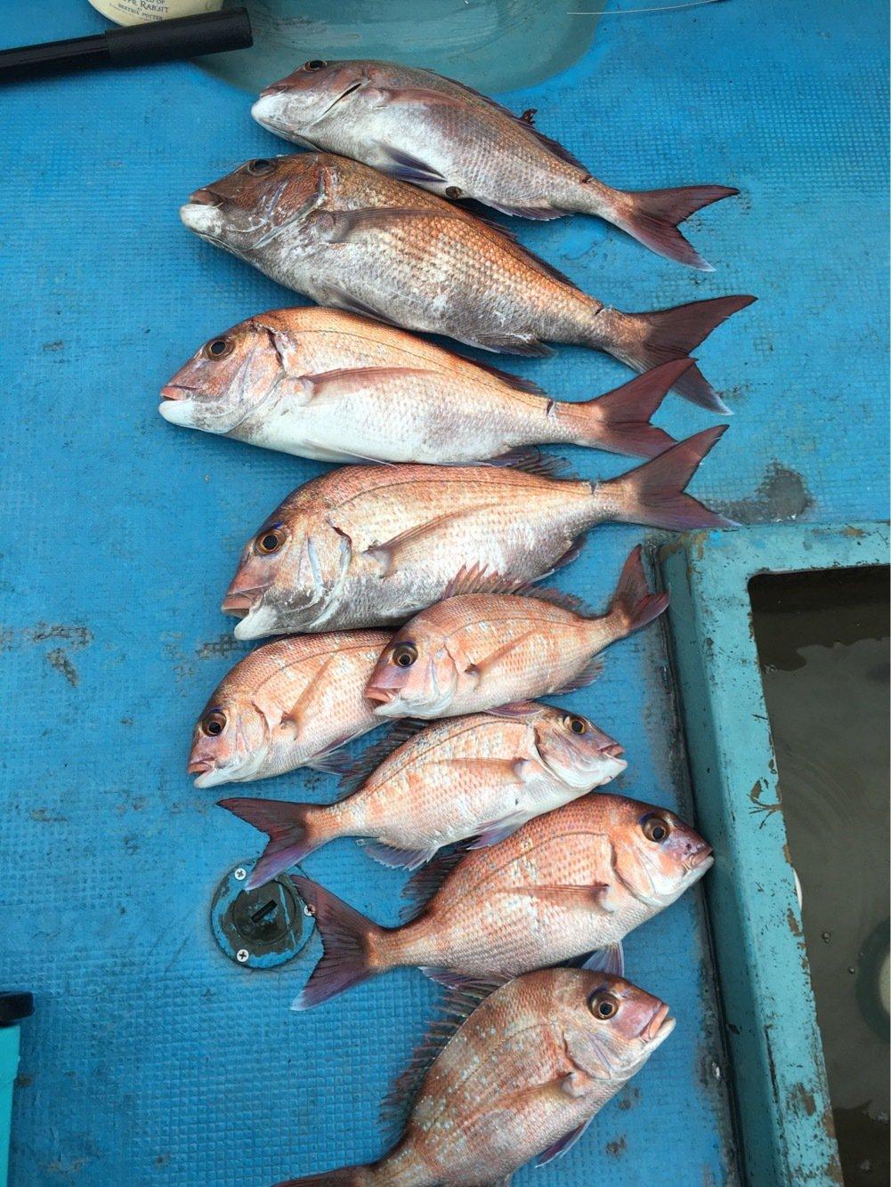 さとしさんの投稿画像,写っている魚はマダイ