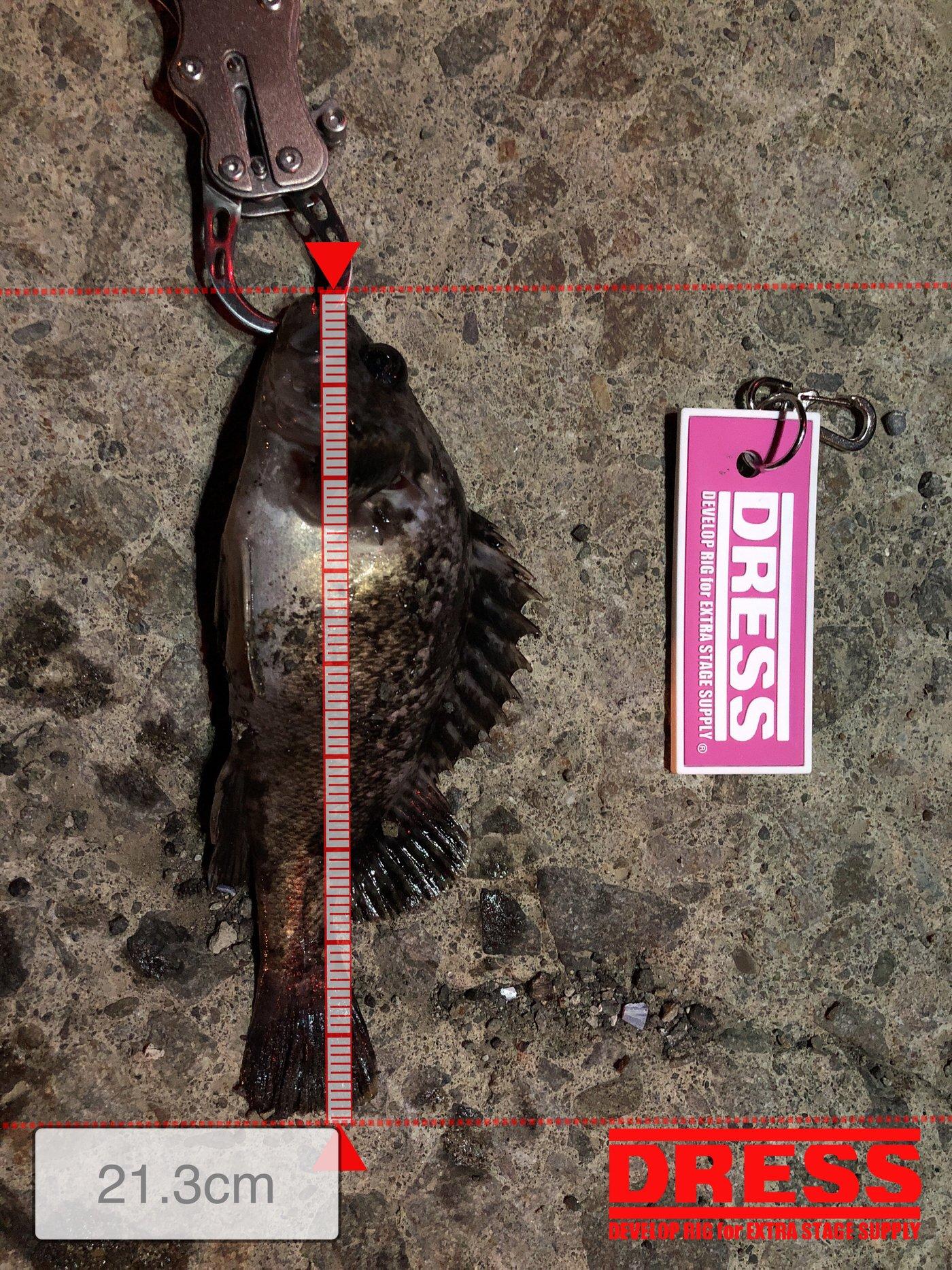 祐二さんの投稿画像,写っている魚はクロソイ