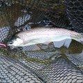 涅槃_BLEEDさんの千葉県香取郡での釣果写真