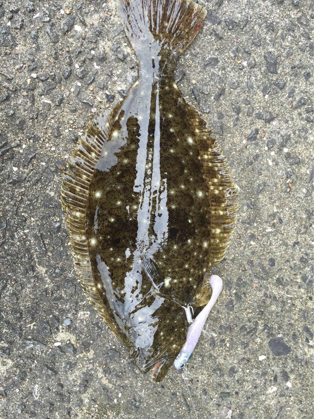 anglerさんの投稿画像,写っている魚は