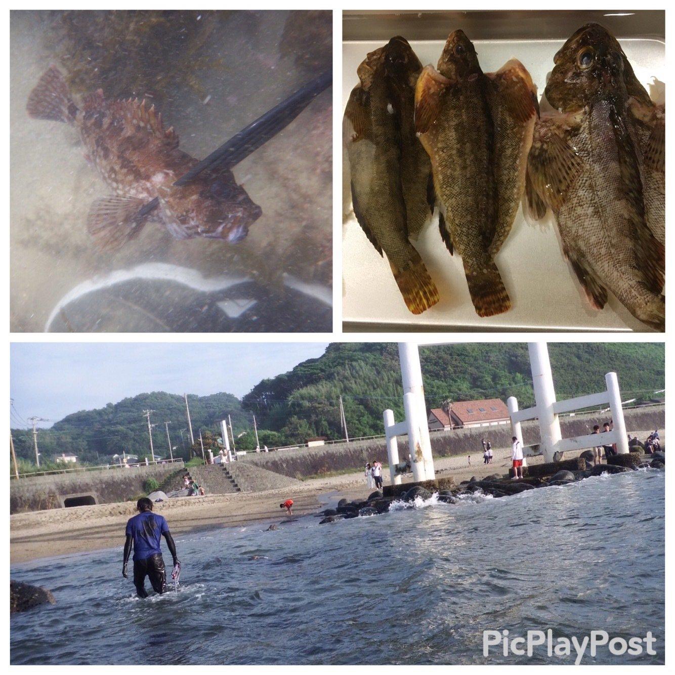 たくさんの投稿画像,写っている魚はアイナメ